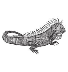 Hand drawn graphic ornate iguana vector