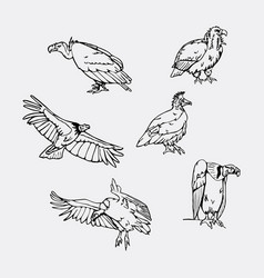 hand-drawn pencil graphics birds of prey set vector image