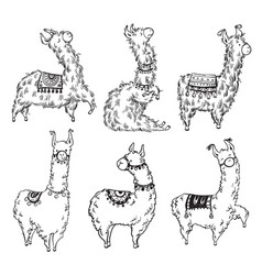 Set of six pretty hand drawn lamas vector