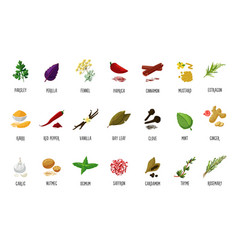 spices and seasoning icons isolated on vector image