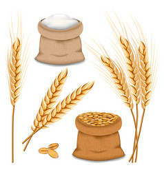 Barley spikelets mockup set realistic style vector