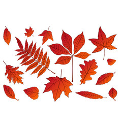 collection beautiful colorful set autumn leaves vector image