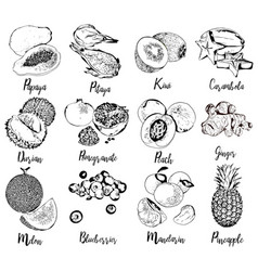 Collection of fruits and berries in hand drawn vector
