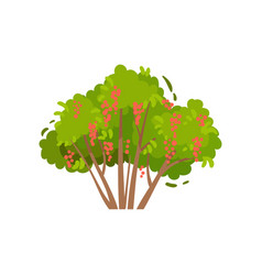 green brush with tasty red currants shrub with vector image