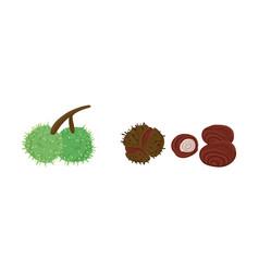 Hand drawn chestnut fruit vector