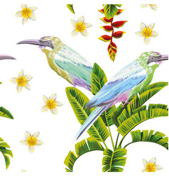 tropical birds flowers and plants white background vector image