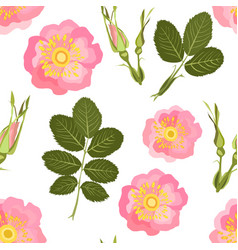 wild rose seamless pattern vector image