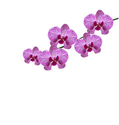 beautiful purple realistic orchid flowers on a vector image