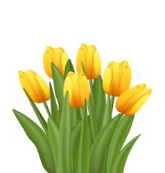Beautiful Bouquet with Yellow Tulips Flowers vector image