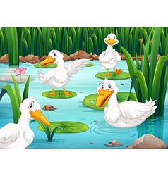 Four ducks living in the pond vector