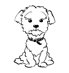 Sketch funny maltese dog sitting vector