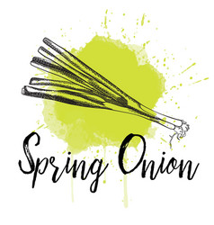 Spring onion hand drawn vector