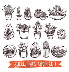 Succulents And Cacti Sketch Set vector image