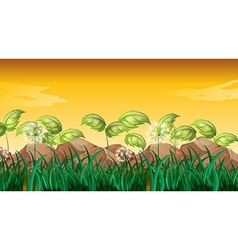 Grasses near the big rocks vector image
