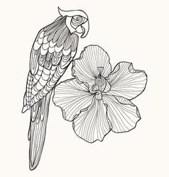 Parrot exotic bird with flower hibiscus vector image