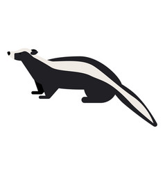 Skunk flat on white vector