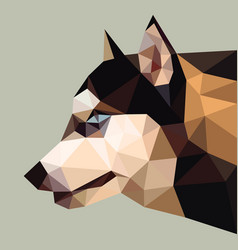 Siberian husky low polygon head vector