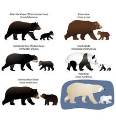 Bears and bear-cubs vector
