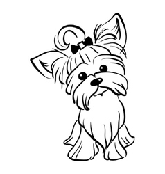 sketch funny Yorkshire terrier dog sitting vector image vector image