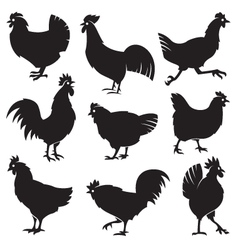 chicken set vector image