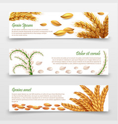 Agricultural cereals banners template realistic vector