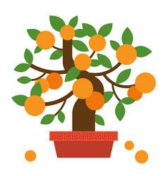 chinese orange bonsai tree vector image