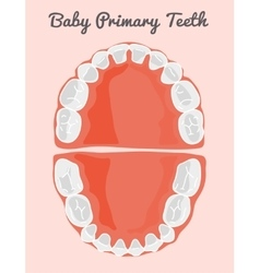 Human teeth infographic Teeth Infographic vector