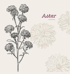 Aster flower sketch vector