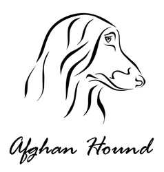 Afghan Hound vector image