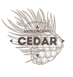 cedar nut spice or natural condiment isolated icon vector image