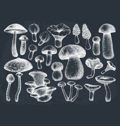 Edible mushrooms collection hand drawn foo vector