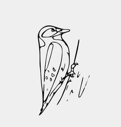 hand-drawn pencil graphics small bird starling vector image