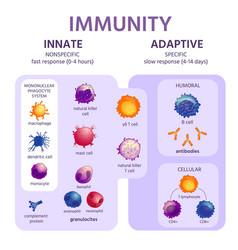 Innate and adaptive immune system immunology vector