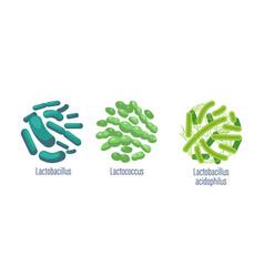 set probiotic bacteria lactobacillus vector image