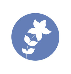 star flower natural icon vector image