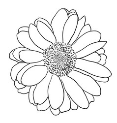 Beautiful monochrome sketch black and white vector