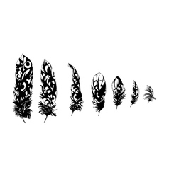 Black feathers vector