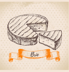 hand drawn sketch brie cheese background of vector image