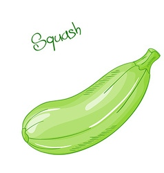 isolated cartoon fresh hand drawn squash vector image