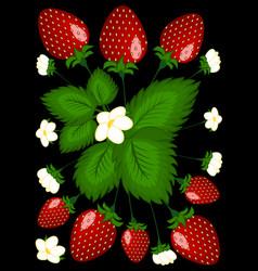 Strawberry berries on bush - vertical vector