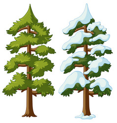 two pine trees with and without snow vector image