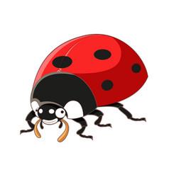 cartoon smiling ladybird vector image