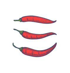 hand drawn set of chili peppers isolated vector image vector image