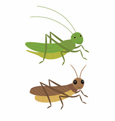 cricket and locust differences vector image