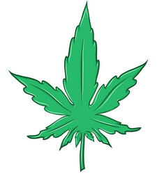 marijuana leaf cartoon isolated on white vector image