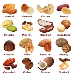 nut types signed names mockup set realistic style vector image
