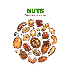 nuts and seeds collection vector image