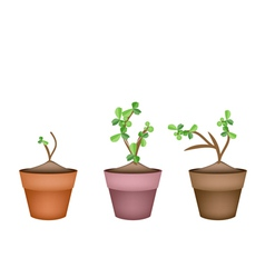 Bonsai Trees and Green Plants in Ceramic Pots vector image
