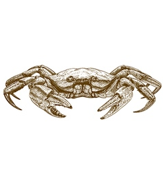 Etching crab vector