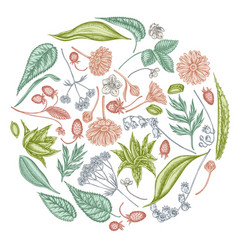 Round floral design with pastel aloe calendula vector